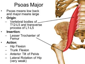 Psoas stretching and mobility